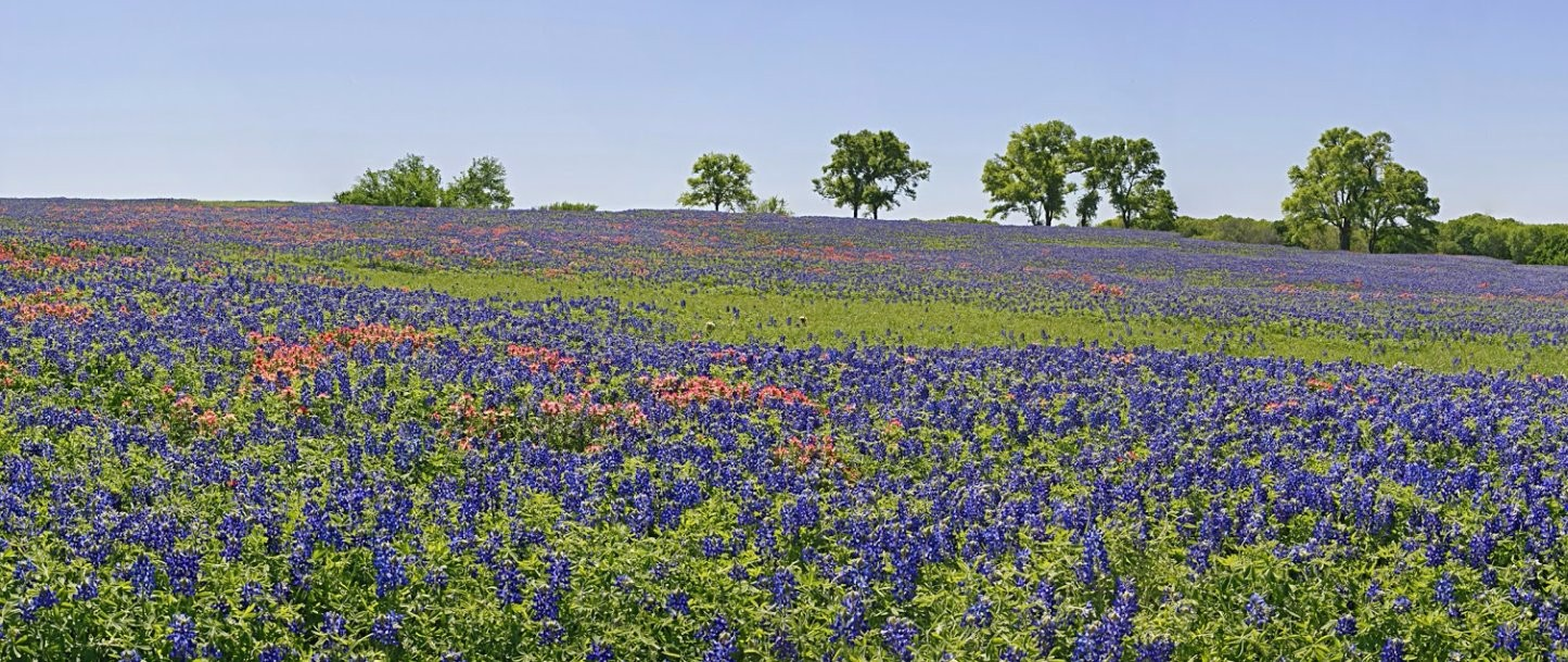 College station county